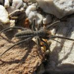 How Dangerous is a Camel Spider?