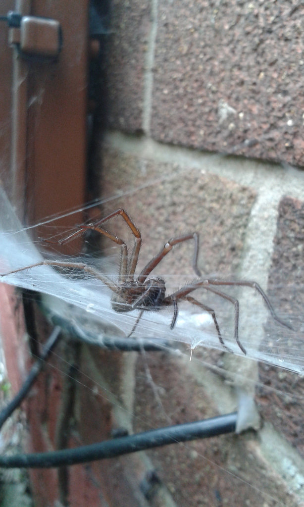 Spider On House Siding