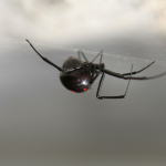 4 Common Myths about Spiders